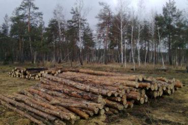 Акція проти вирубки Биківнянського лісу